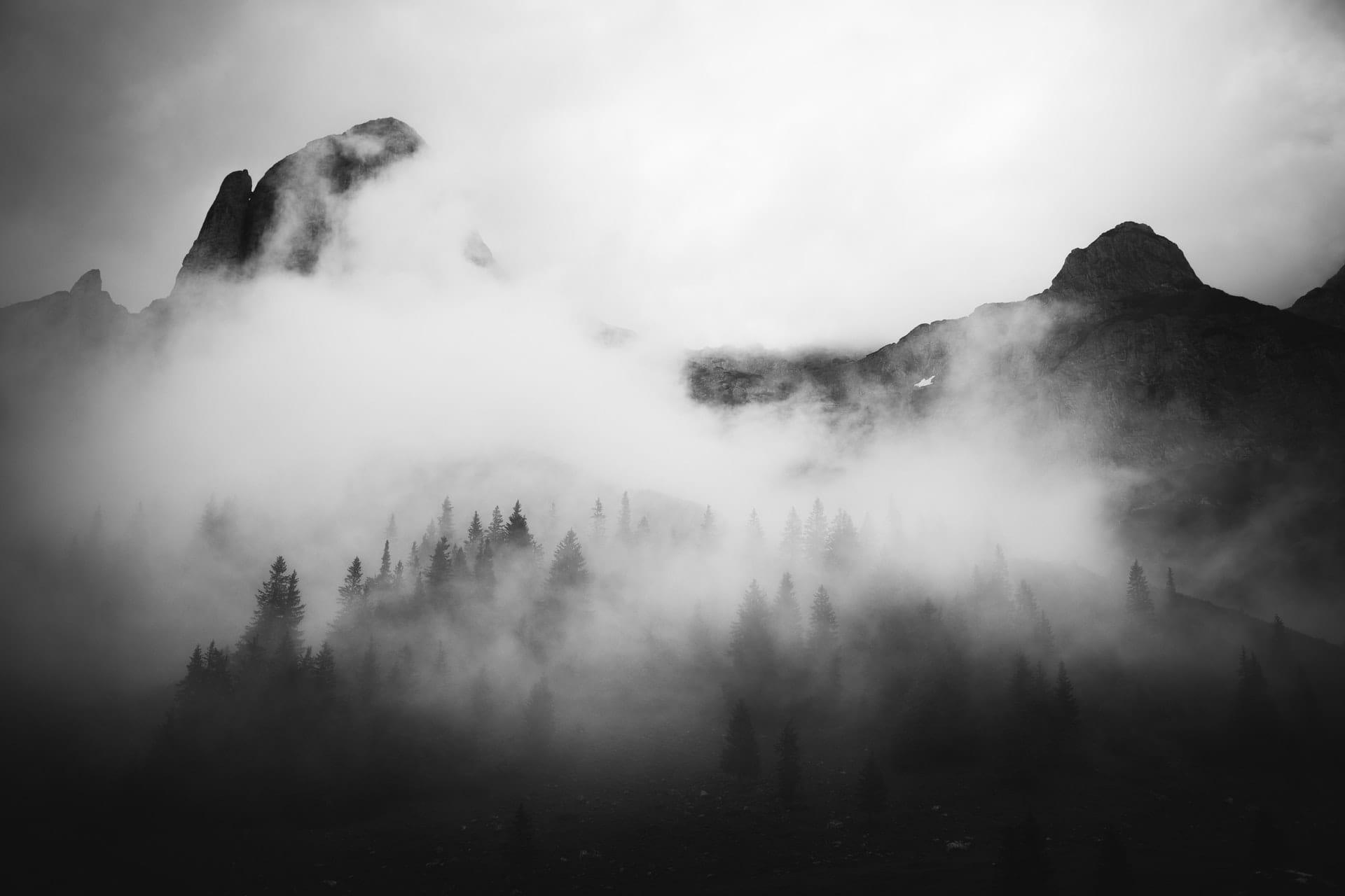 fog-pines
